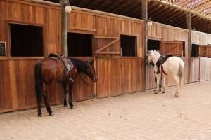 Cavalos Hípica