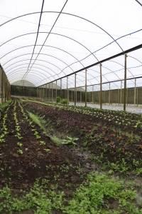 Estufa orgânica plantas horta