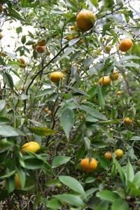 Frutas Pomar