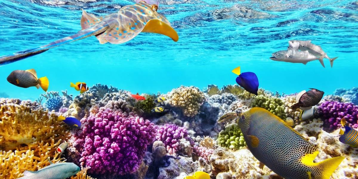 Científicos de Cuba y EE. UU. evalúan hallazgos en arrecifes