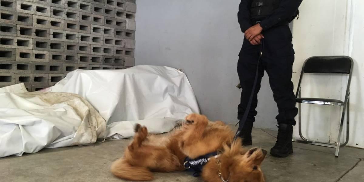 Refuerzan a PF con 30 nuevos oficiales caninos