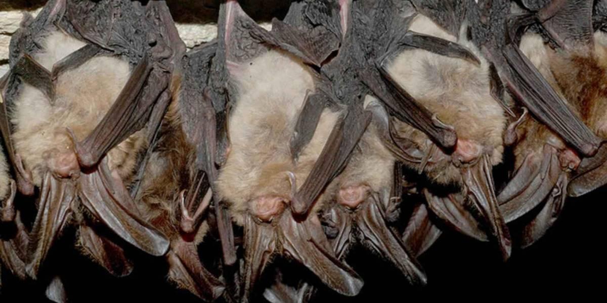 Estigma contra murciélagos los pone en peligro de extinción