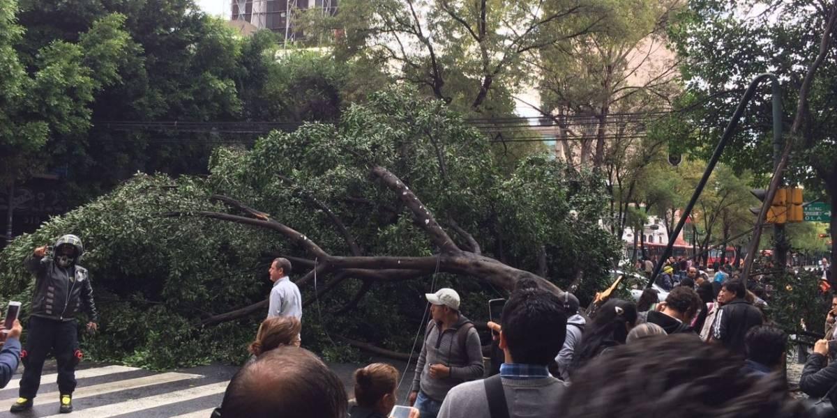 Metrobús suspende servicio en Insurgentes Sur por caída de árbol a la altura de Bajío