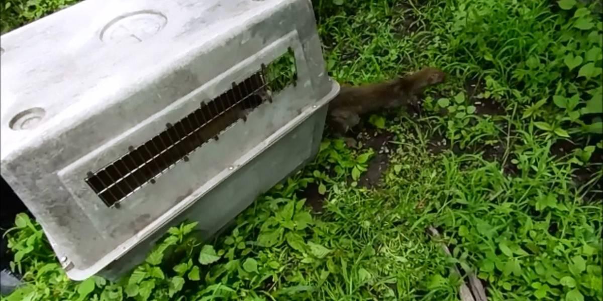 Reincorporan animales silvestres a su hábitat en Tlajomulco, Jalisco