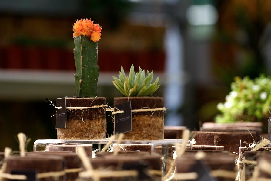 Dejar plantas en el dormitorio es malo: ¿mito o realidad?