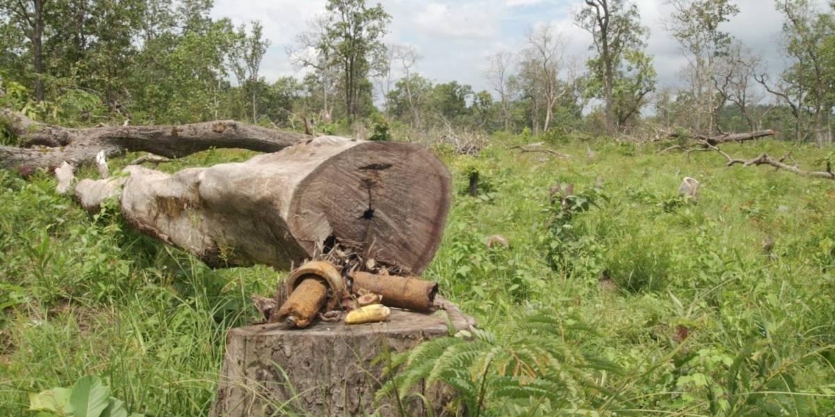 Colombia crea el Consejo Nacional de Lucha contra la deforestación