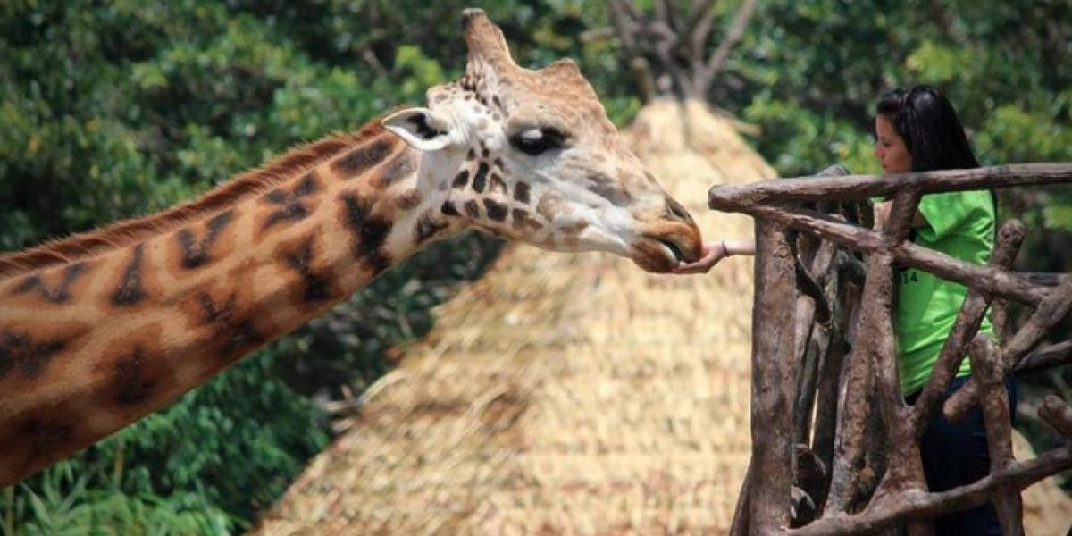 """¿Cómo ser parte de un """"Tour VIP"""" en el Zoológico La Aurora?"""