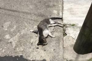 asesinato-de-gatos-en-la-zona-6-de-mixco.jpg