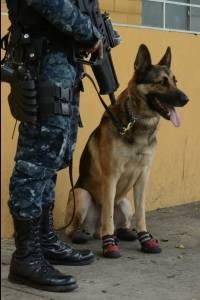 agente canino