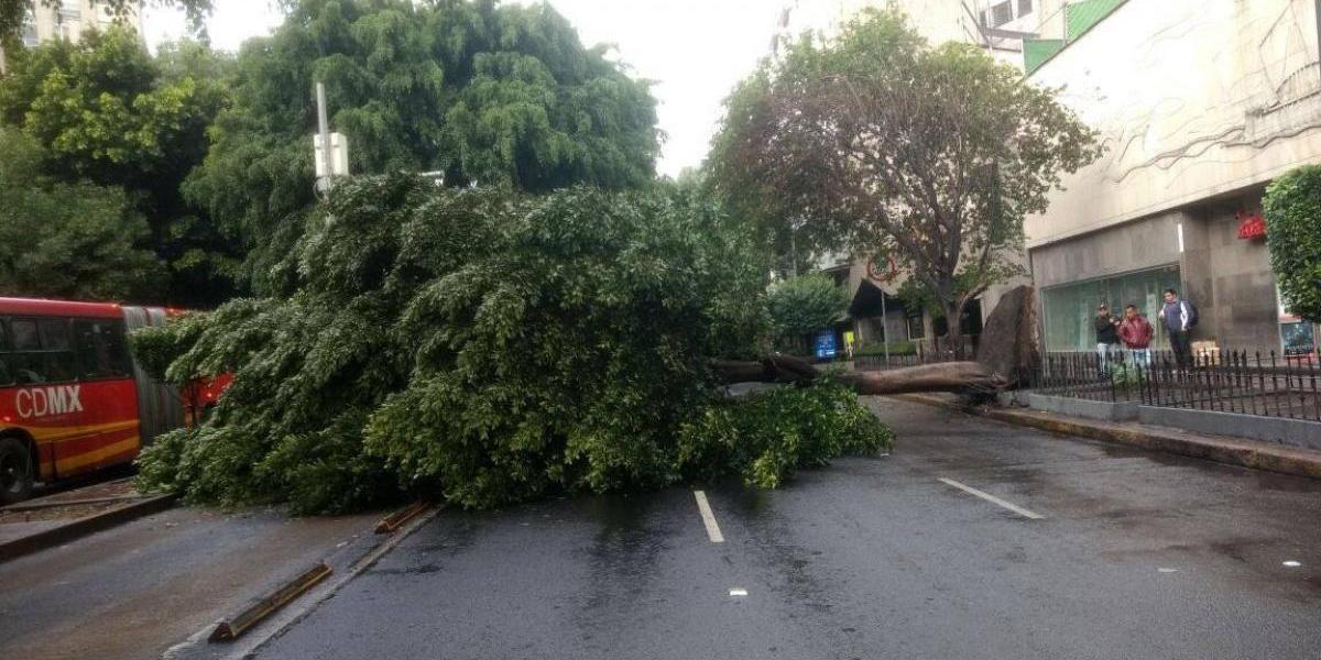 Cae árbol sobre Avenida Insurgentes, a la altura del Metro Chilpancingo