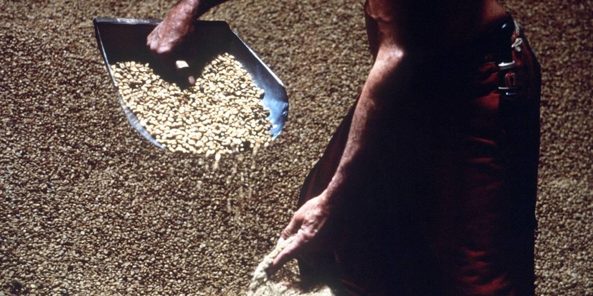 Colombia se apoya en el café para dar nuevas oportunidades a exguerrilleros