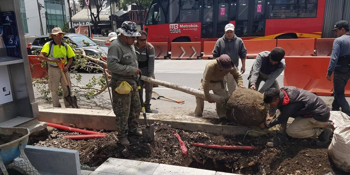 Suman 377 árboles plantados en desnivel de Río Mixcoac