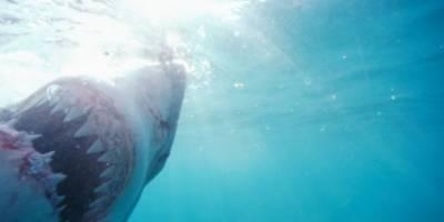 Tiburón muerde a bañista en una playa de Miami