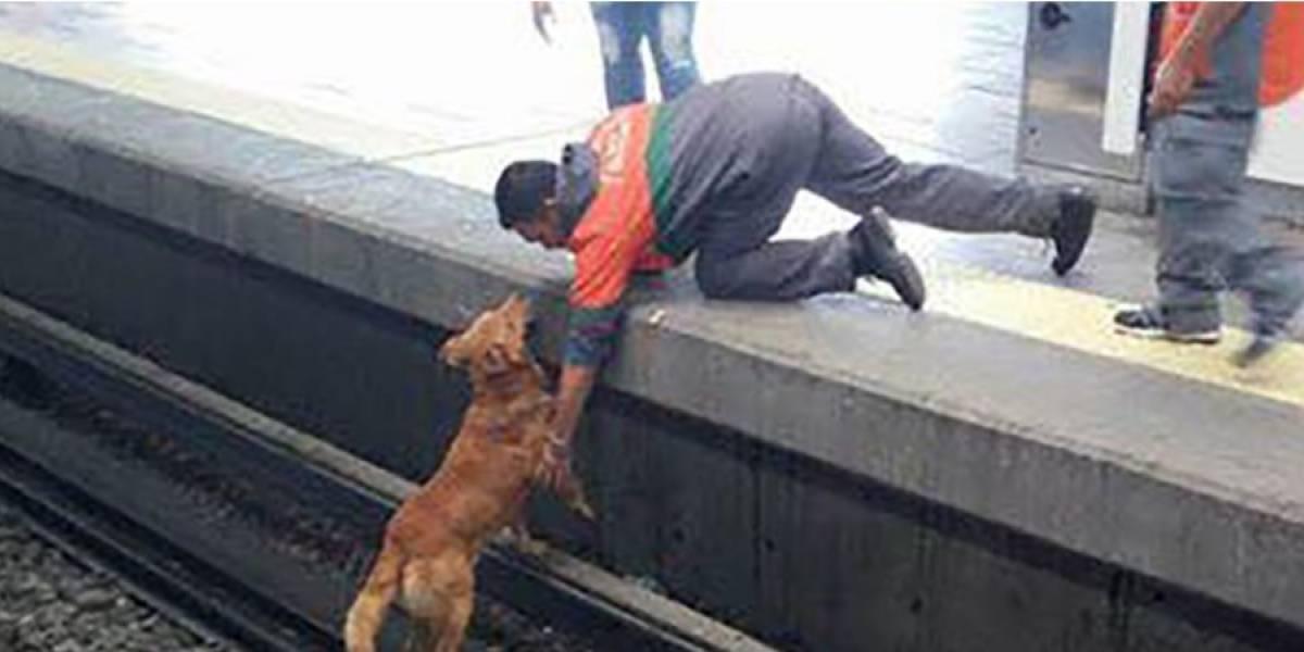 Muere perro en vías de Pantitlán y la sociedad tunde al Metro por no cortar electricidad