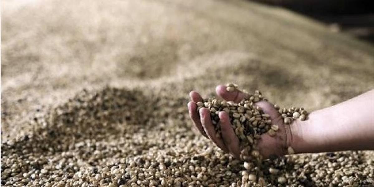 Más de 40 países participarán en Foro Mundial de Productores de Café en Medellín