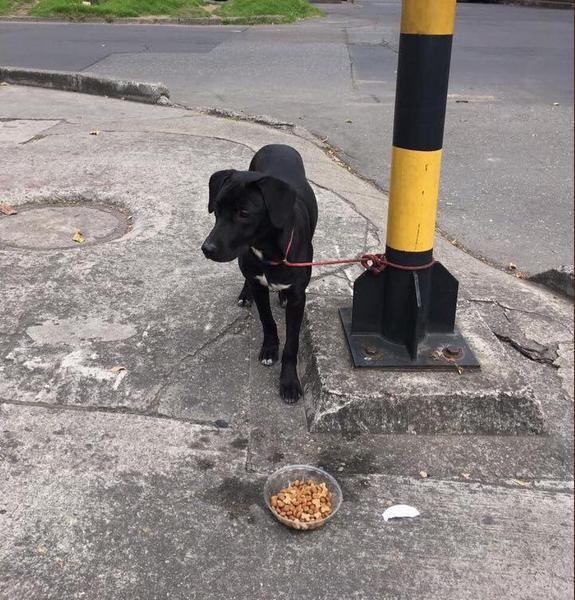 ¡Indignante! Un perro fue abandonado y amarrado a un semáforo de Bogotá