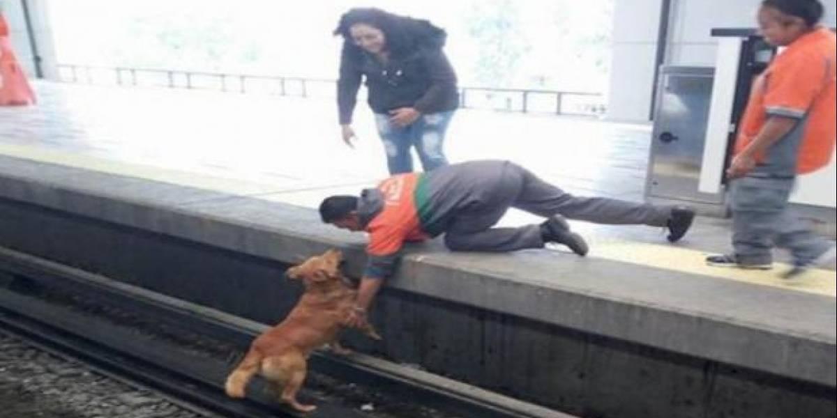 Metro descarta omisiones del personal en muerte de perro en Pantitlán