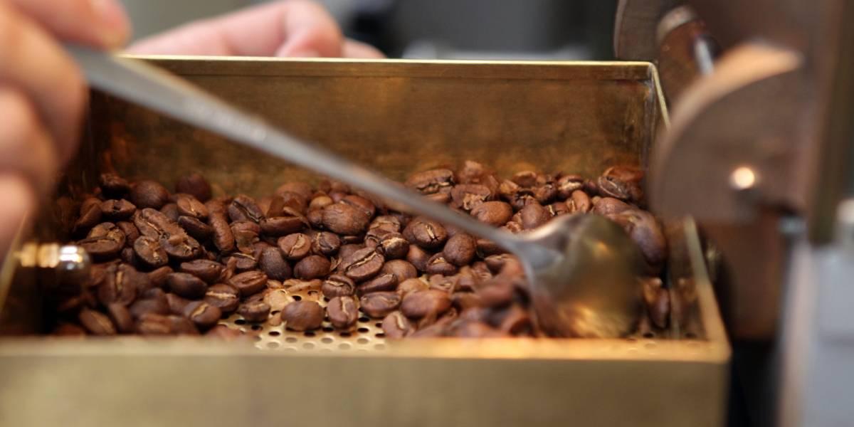 De la coca al café para superar el dolor de las minas antipersona en Colombia