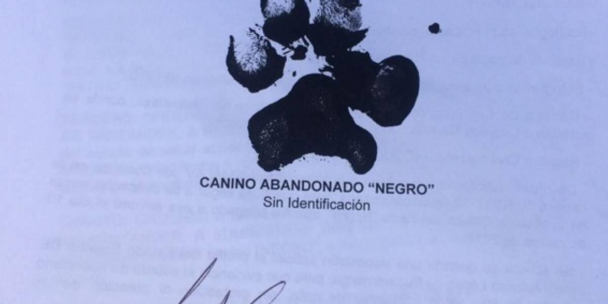Un perro interpuso una tutela para que lo atienda un veterinario en Bucaramanga