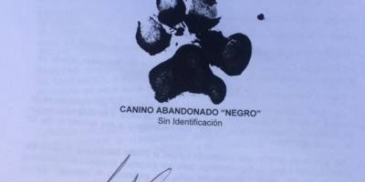 En Bucaramanga interponen tutela por la vida de un perro — COLOMBIA
