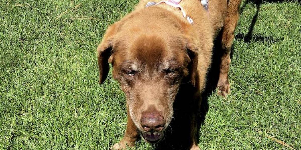 Una perra volvió a su casa tras 9 meses perdida en la montaña
