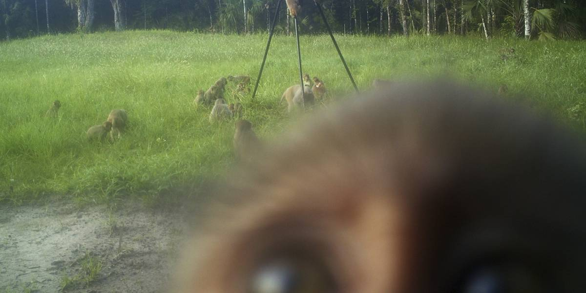Invasión de monos tiene en jaque a un parque en Florida