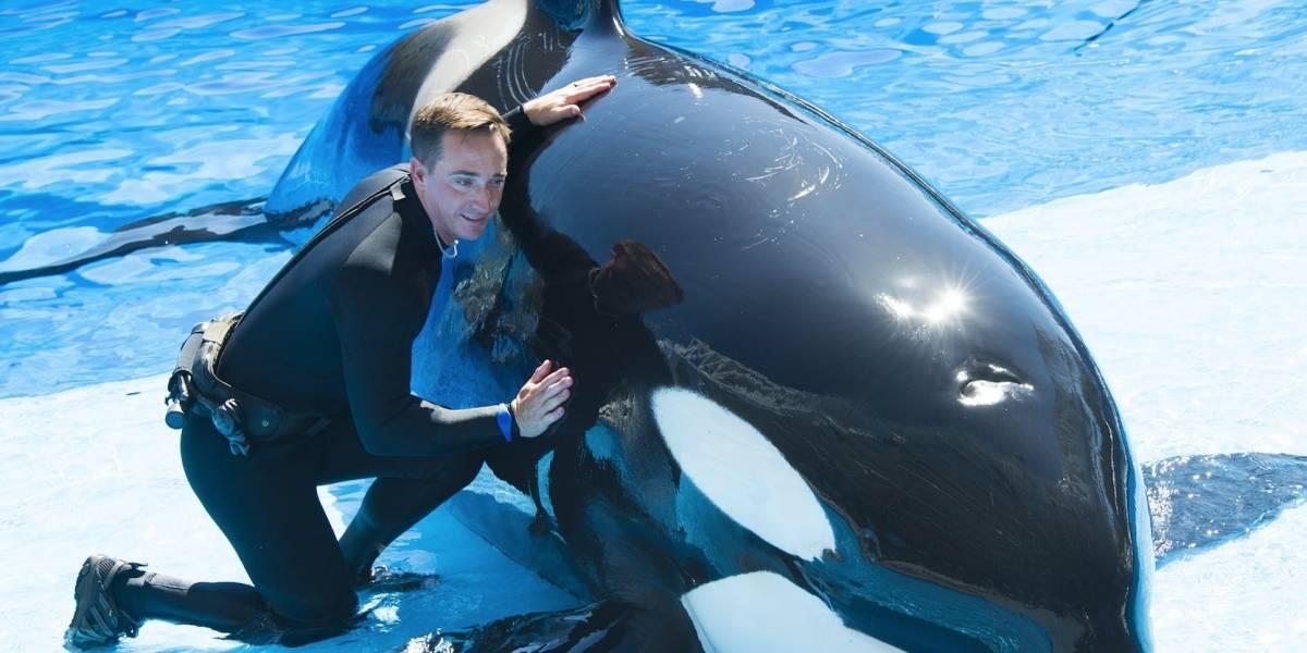 SeaWorld ofrece a visitantes encuentro más