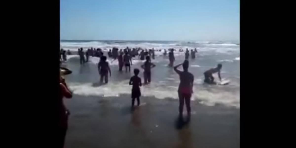 Cadena humana salva de ahogarse a familia en Florida