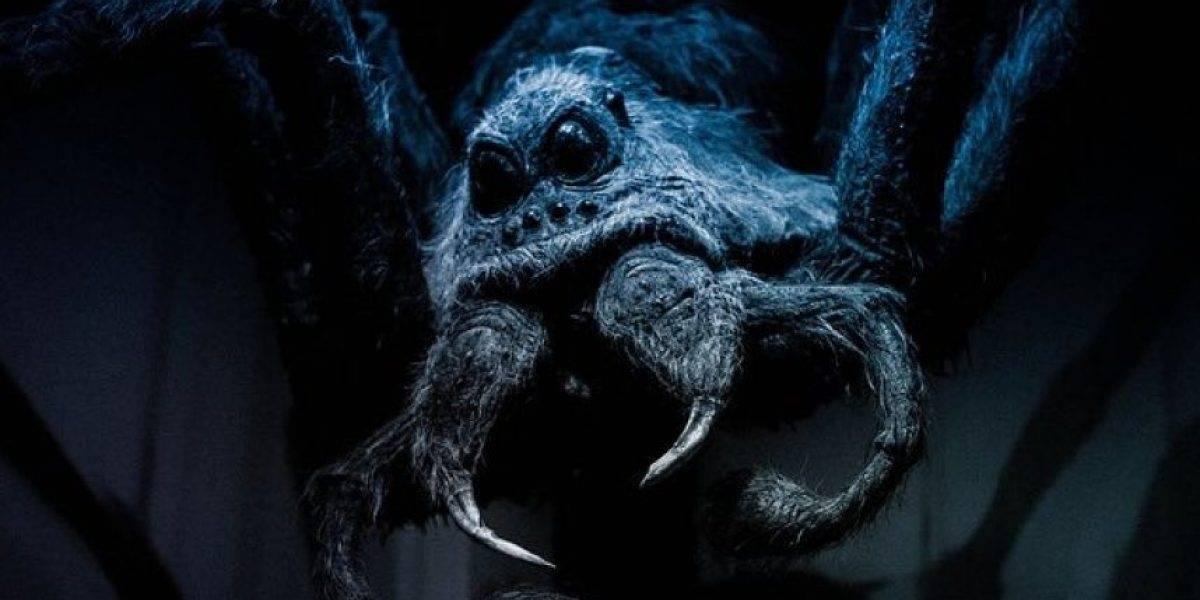 FOTOS. Descubren una araña similar a la que aparece en 'Harry Potter'
