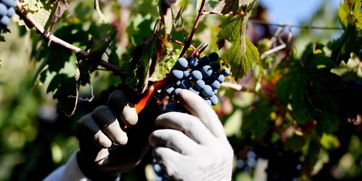China y Brasil lideran crecimiento de exportaciones de vino chileno