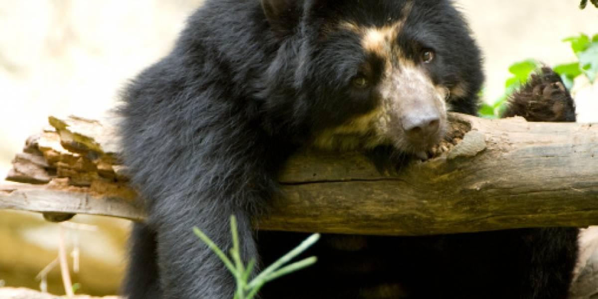 ¡Cuidado! Los animales silvestres empiezan a aparecer en las calles de Quito