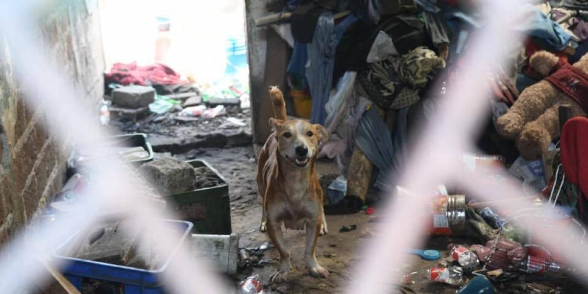 Localizan cadáver de hombre en zona 5; perros se lo estaban comiendo