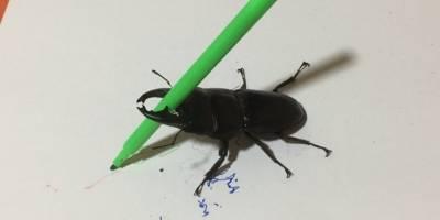 ¡Insólito! Un escarabajo 'artista' causa furor en las redes