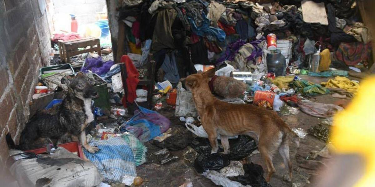 Piden que rescaten a los perros que intentaban comerse a su dueño