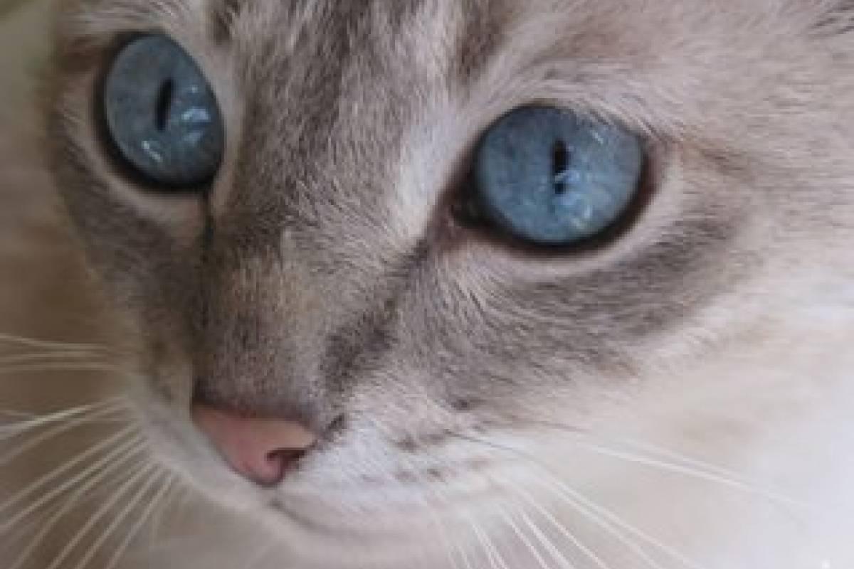 los gatos transmiten parasitos a los humanos