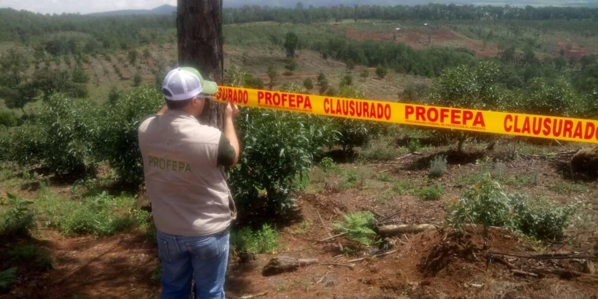 Clausura Profepa predios ilegales de aguacate en Jalisco