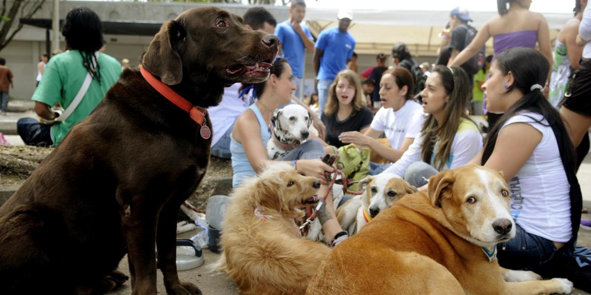 Perros callejeros estarán protegidos por una ley