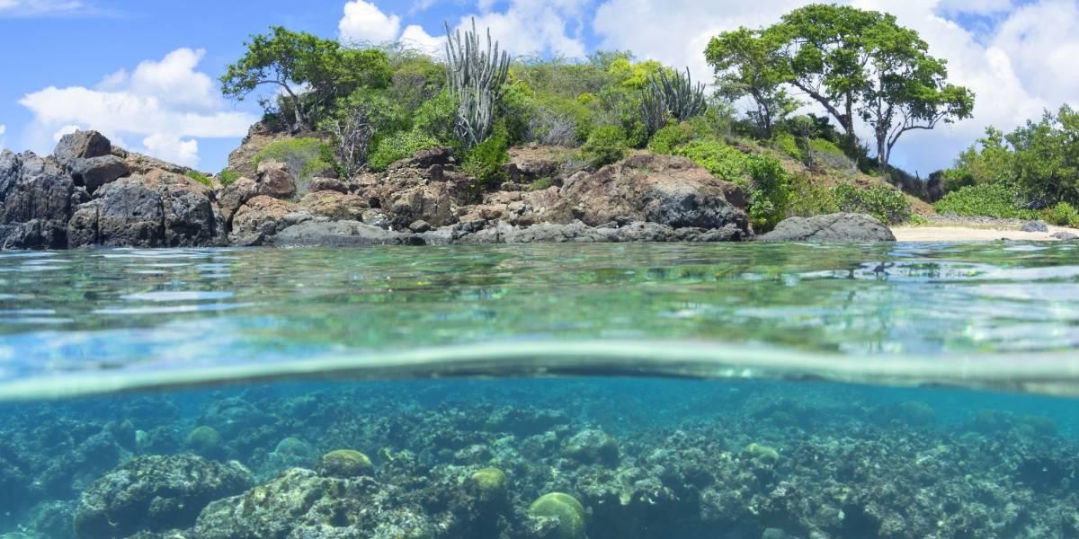 UPR recibirá fondos federales para rehabilitación de arrecifes