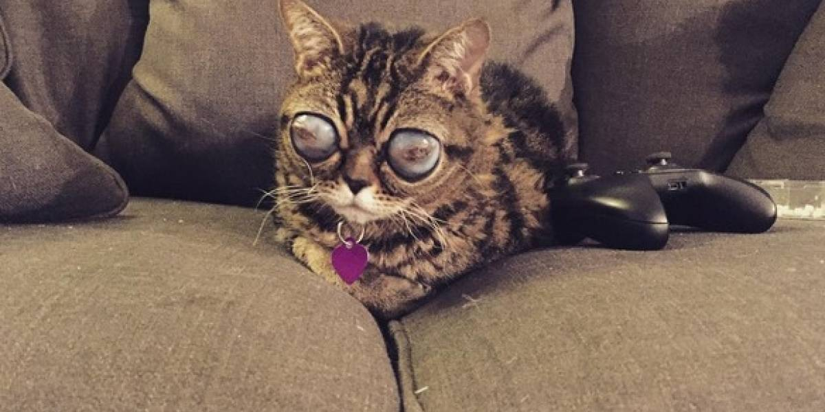 """Matilda: la """"gata alien"""" que enterneció al mundo por su extraña enfermedad"""