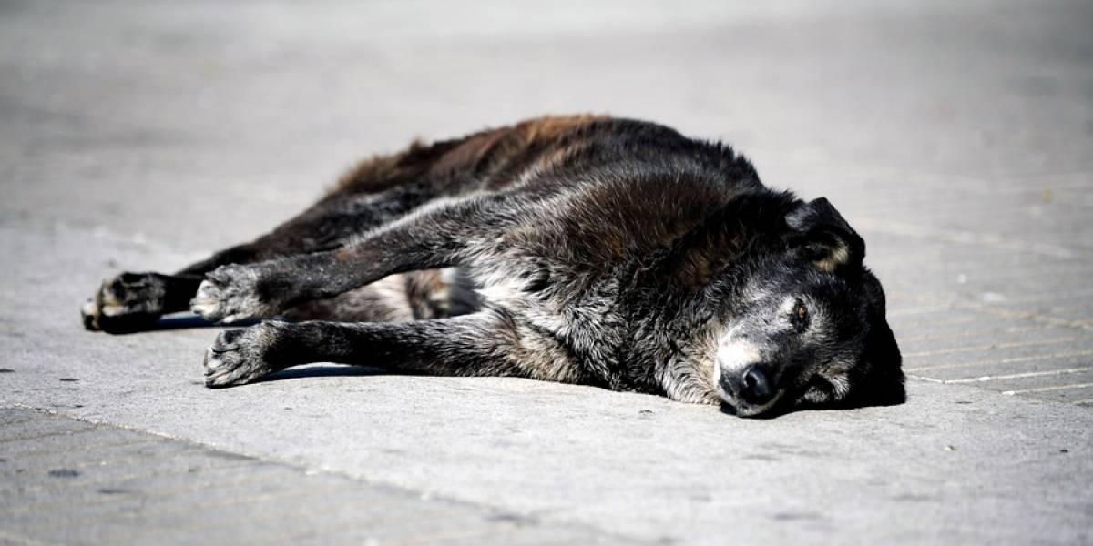 """Baldes con colas, ojos y vísceras en un """"tétrico"""" escenario: acusan a hombre de mutilar y comer perros en Viña del Mar"""