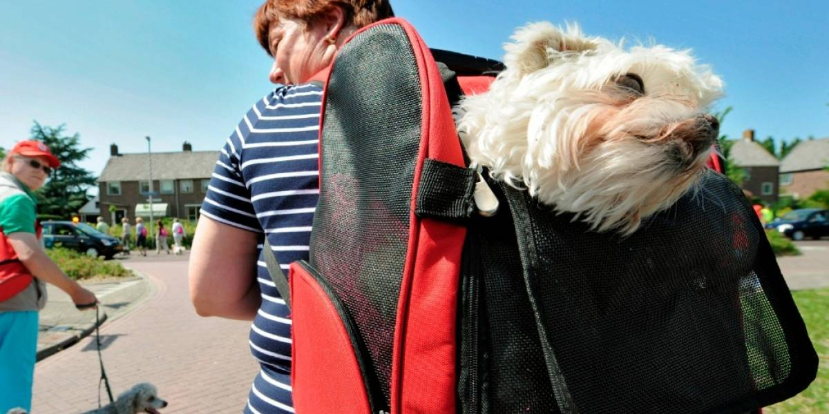 El domingo se realizará una jornada de adopción canina en Soacha