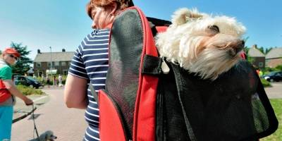 ¿Su mascota sufre del síndrome del perro pequeño?