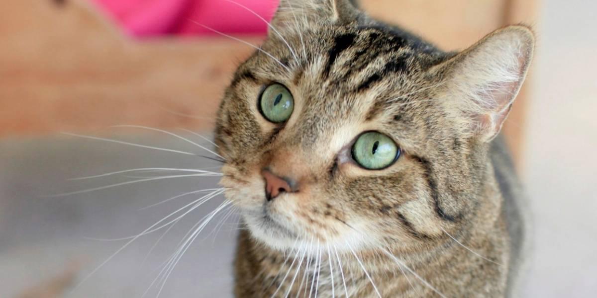 Mi gato tiene una herida ¿cómo puedo curarlo?
