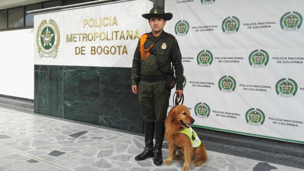 Igor, el perro que encontró un cargamento de marihuana en el Aeropuerto El Dorado