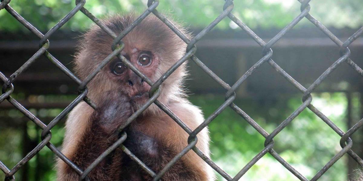 Crisis económica de Puerto Rico golpea zoológico de Mayagüez
