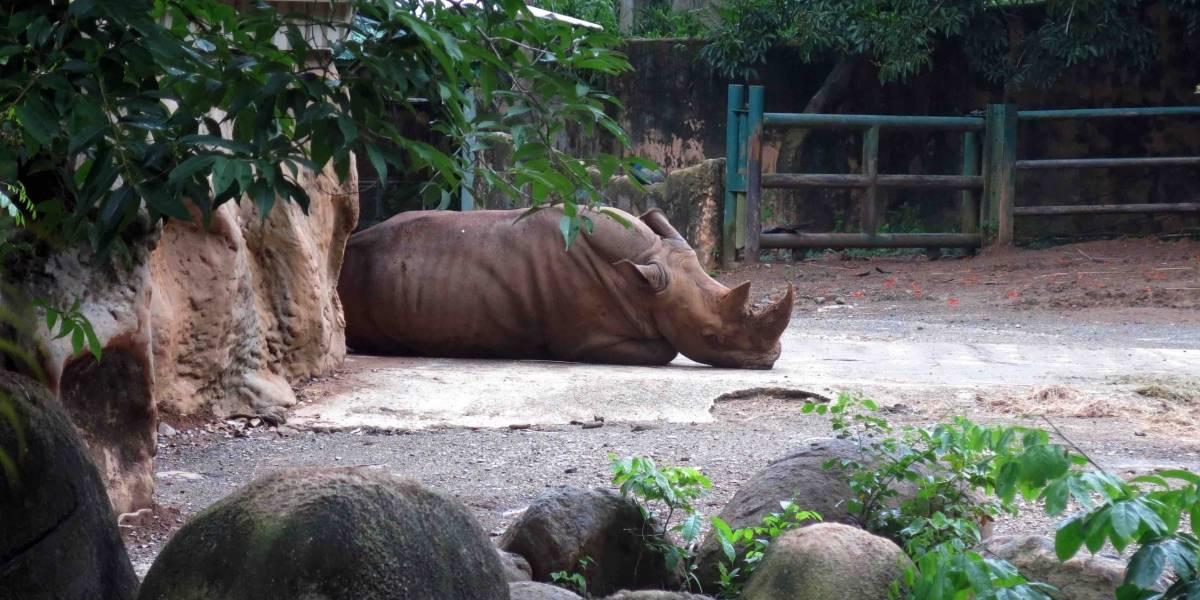Exigen al gobierno cierre de Zoológico para reubicar animales en santuarios