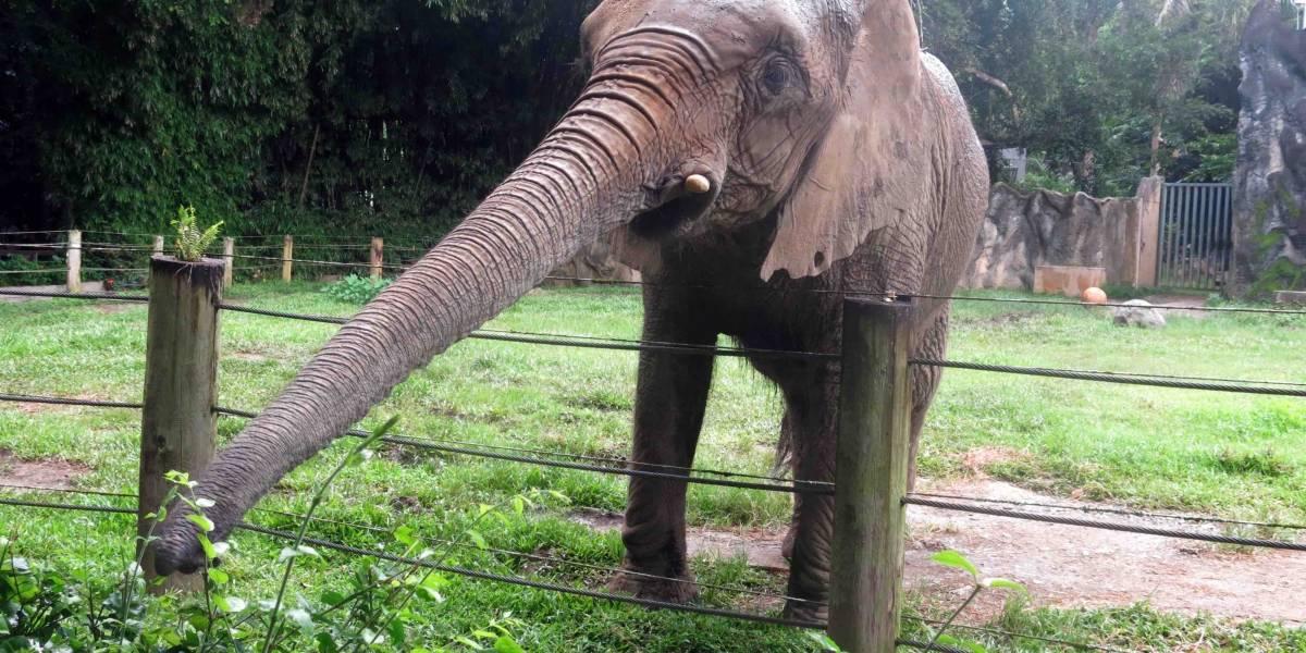 Alcalde no quiere que saquen a Mundi de zoológico de Mayagüez