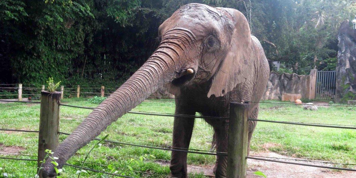 Prohíben entrada y fotos en el Zoológico de Mayagüez