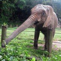 Colegio de Abogados presenta resolución con denuncias por la negligencia en el zoológico de Mayagüez