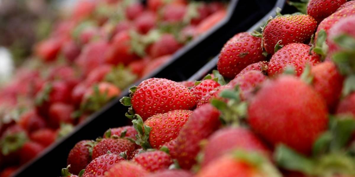 Evalúan daños en el sector frutícola tras recientes heladas